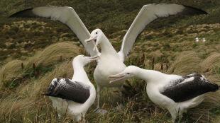 Nowy atlas ma uratować morskie ptaki