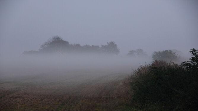 Gęsta mgła nad Polską. Alerty IMGW w sześciu województwach
