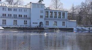 Łabędź krzykliwy na rzeką Prosną
